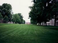 Огромный зеленый газон