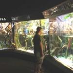 33. Посетители наблюдают жизнь тропиков