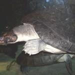 38. Черепахи